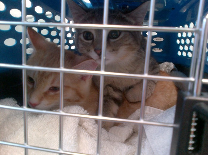 A big day for the kittens: Trip to the Vet!