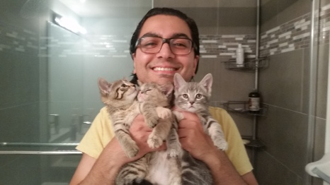 Day 1 with a handful of kittens!
