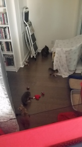 Life in the kitten camp