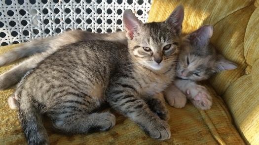 Riker and B'Elanna napping