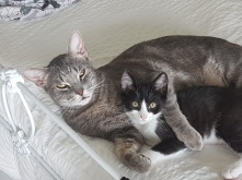 Riker and Nico